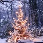 Nach-Weihnachtsbaum