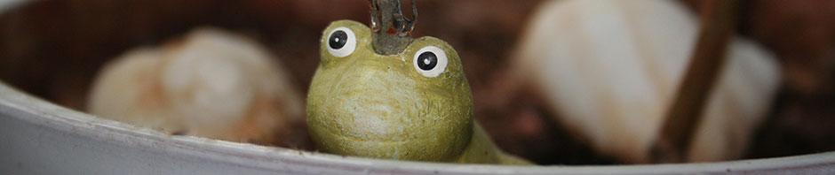Frosch sieht über den (Teller)Rand