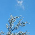 Frühlingsbilder, Blüten, eine Biene und ein Schmetterling